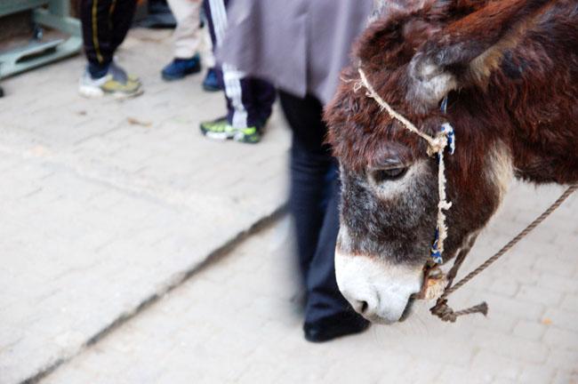 Marokko14 - Fez: een 1001 nacht-sprookje