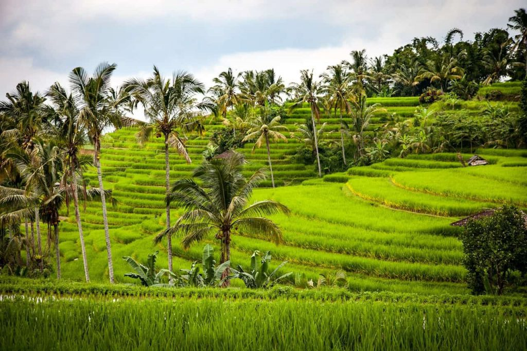 indonesie bali pixabay 1024x682 - De beste reistijd voor Bali (klimaat + tips voor elk seizoen)