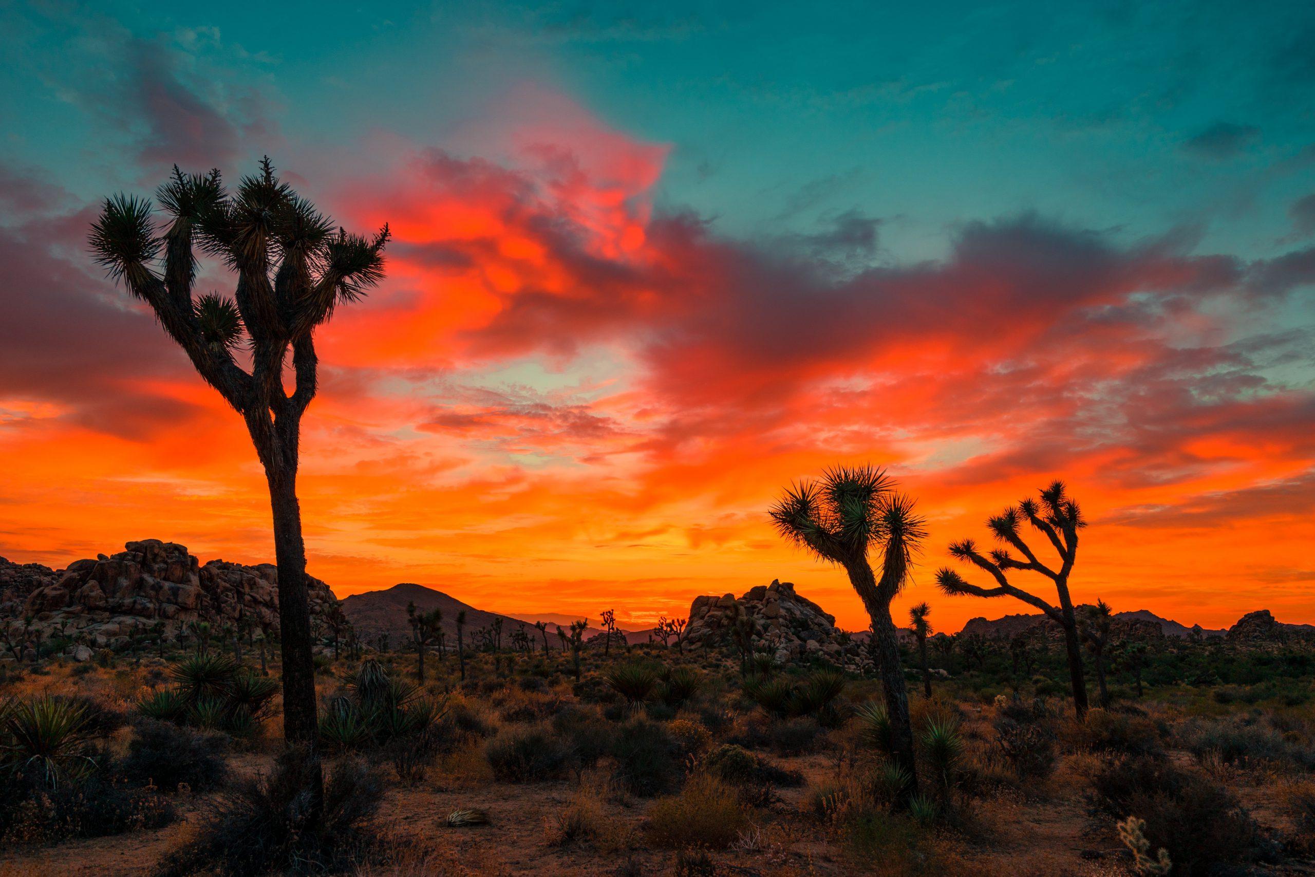 sasha stories TYSOf4gV94c unsplash scaled - De 30 mooiste plekken in Amerika: van steden tot natuur en meer!
