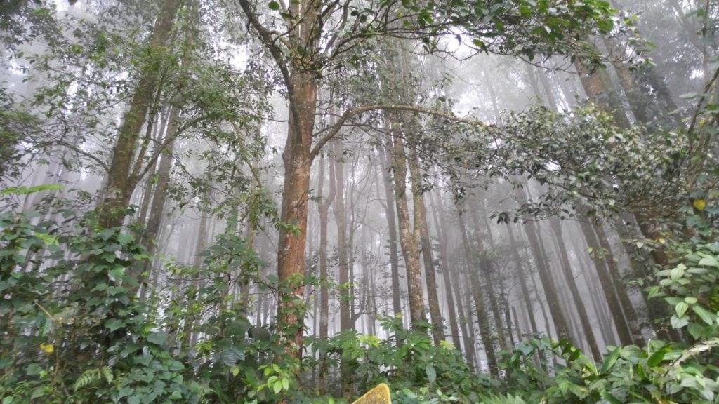 regen bali pxhere 1024x576 - De beste reistijd voor Bali (klimaat + tips voor elk seizoen)